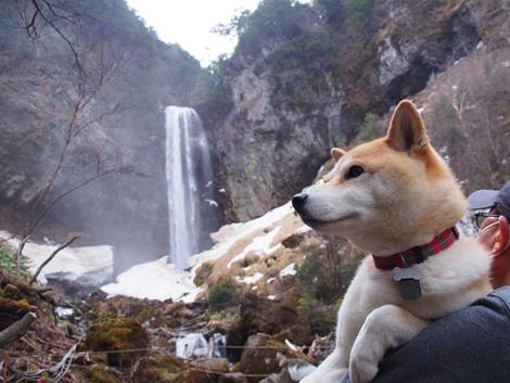 平湯大滝とさくら