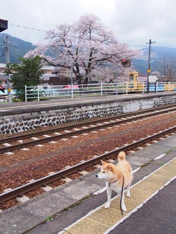 飛騨一ノ宮駅にて