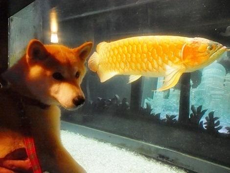 大きな魚!