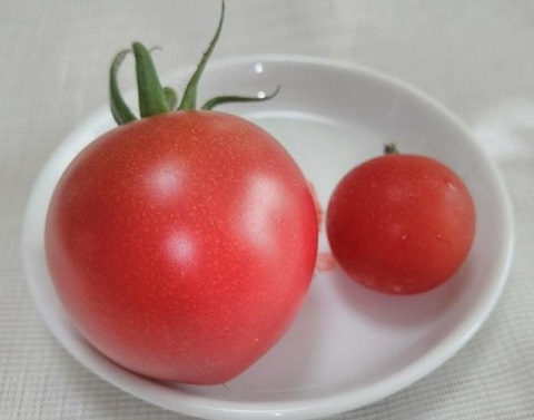 平成28年6月20日初収穫2