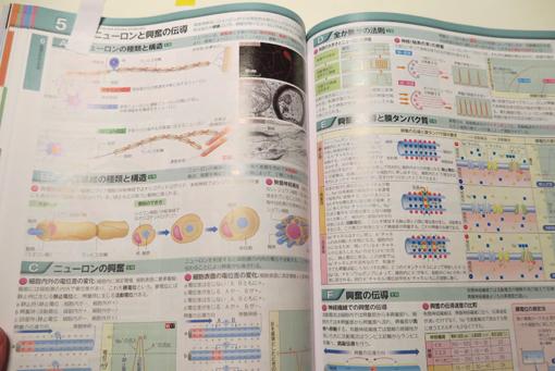 book-in.jpg