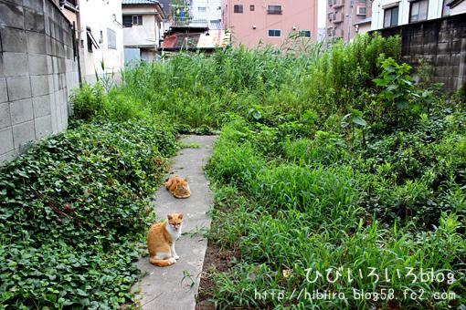 猫写2016(098)