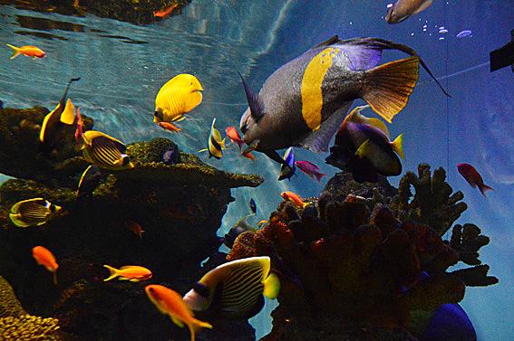 日野水族園