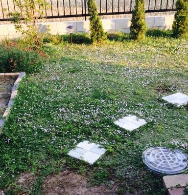 美奈の庭3