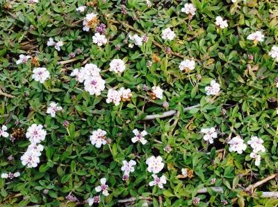美奈の庭4