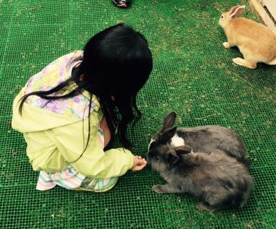 ウサギと触れる