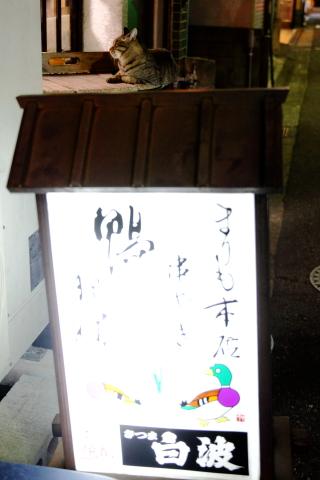 20160728kanbanneko2.jpg