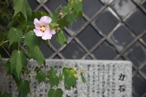 20160831chikaraishi.jpg