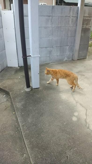 0917猫いた2
