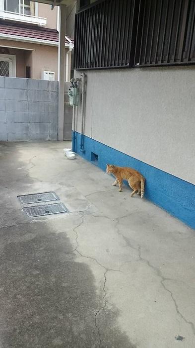 0917猫いた3