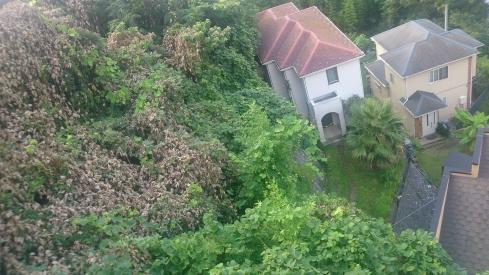 20160806森の家
