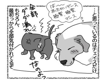 羊の国のラブラドール絵日記シニア!!「チェイスの大作戦!」4