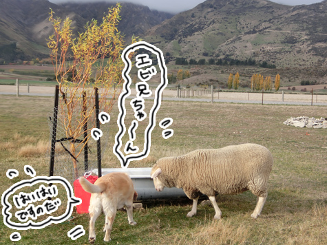 羊の国のラブラドール絵日記シニア!!「ファーム・キャットへの道のり~実践編~」4