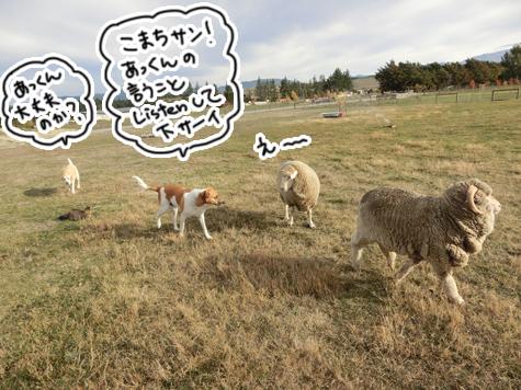 羊の国のラブラドール絵日記シニア!!「ファーム・キャットへの道のり~実践編~」8