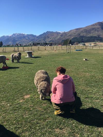 羊の国のラブラドール絵日記シニア!!「テオテオファームのおもてなし」4
