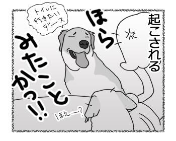 羊の国のラブラドール絵日記シニア!!「珍しく早起き」4