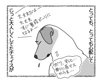 羊の国のラブラドール絵日記シニア!!「泣きっ面にまたハチ」2