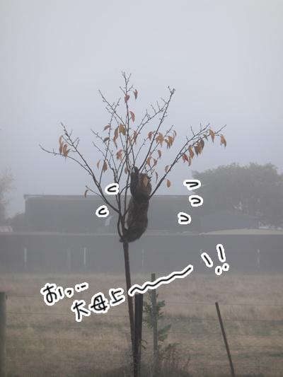羊の国のラブラドール絵日記シニア!!「猫も木から・・・?」5