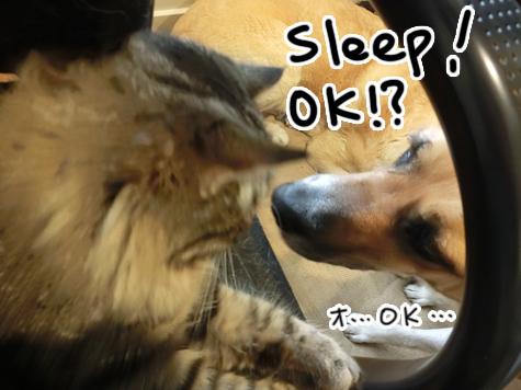 羊の国のラブラドール絵日記シニア!!「チェイスさんのワンポイント英会話」5