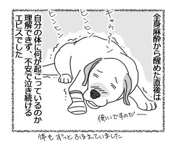 羊の国のラブラドール絵日記シニア!!「泣き虫エビス」1