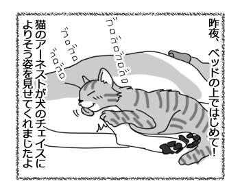 羊の国のラブラドール絵日記シニア!!「猫語と犬語」1