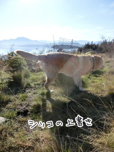 羊の国のラブラドール絵日記シニア!!「男子な散歩」3