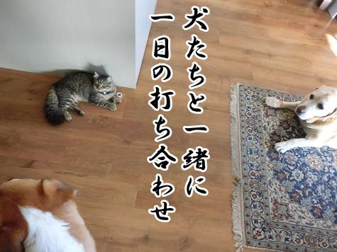 羊の国のラブラドール絵日記シニア!!「猫たちの朝」10