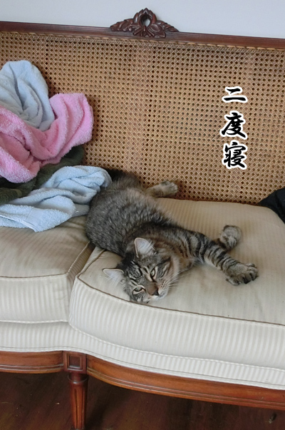 羊の国のラブラドール絵日記シニア!!「猫たちの朝」1