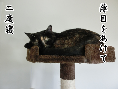 羊の国のラブラドール絵日記シニア!!「猫たちの朝」8