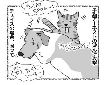 羊の国のラブラドール絵日記シニア!!「子犬認定」1