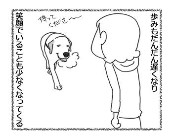 羊の国のラブラドール絵日記シニア!!「シニアのお散歩盛り上げ隊!」3