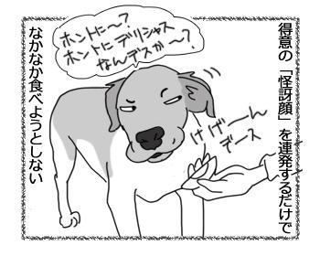 羊の国のラブラドール絵日記シニア!!「犬とゆで卵と私」5