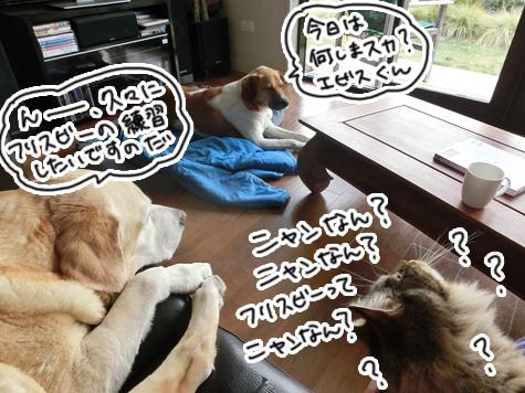 羊の国のラブラドール絵日記シニア!!「グループ名は?」1