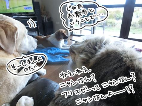 羊の国のラブラドール絵日記シニア!!「グループ名は?」3