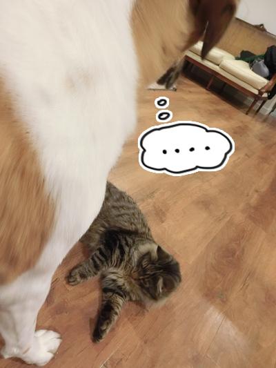 羊の国のラブラドール絵日記シニア!!「そこに猫がいるから」1