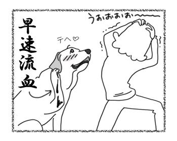 羊の国のラブラドール絵日記シニア!!「抜糸までは良かったが・・・?」イラスト