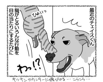 羊の国のラブラドール絵日記シニア!!「猫に夢中!?」1