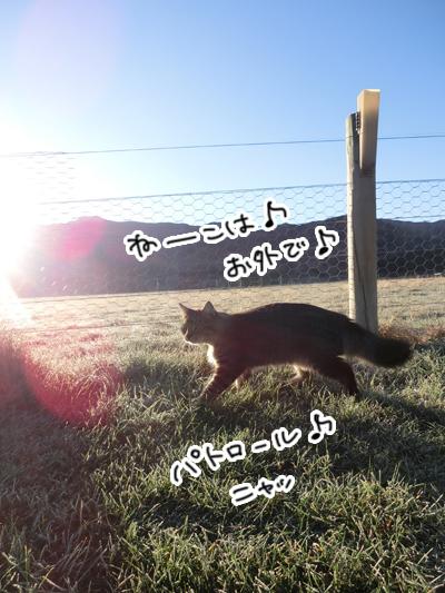 羊の国のラブラドール絵日記シニア!!「冬がそこまで」5