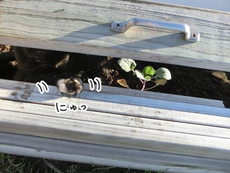羊の国のラブラドール絵日記シニア!!「猫ガーデニング」2