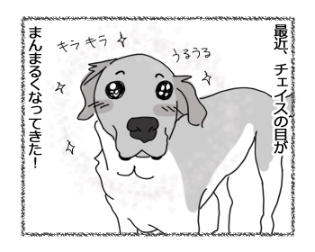 羊の国のラブラドール絵日記シニア!!「こっちも丸い!?」4