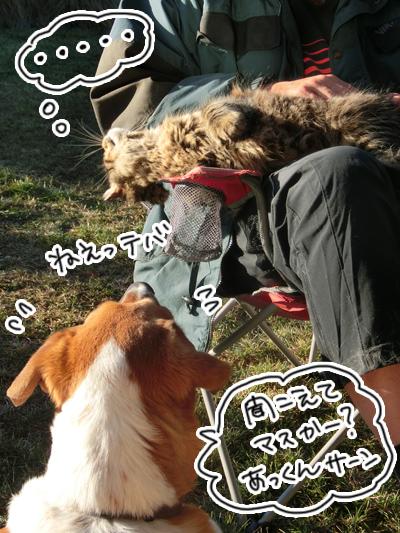 羊の国のラブラドール絵日記シニア!!「フワフワ級チャンピオン」6