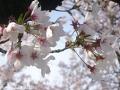 2016春の花3