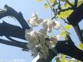 2016春の花5