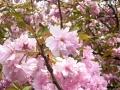 2016春の花9