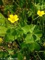 小ぶりの花