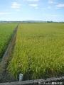 晴れの農道2