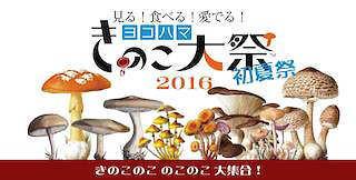 ヨコハマきのこ大祭初夏祭り、参加します!!