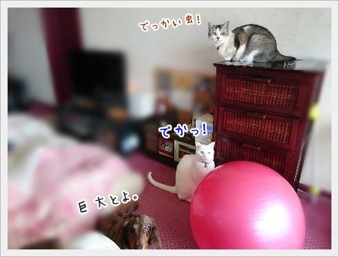 fc2_2016-05-26_09.jpg