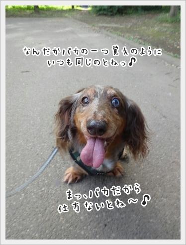 fc2_2016-09-13_07.jpg