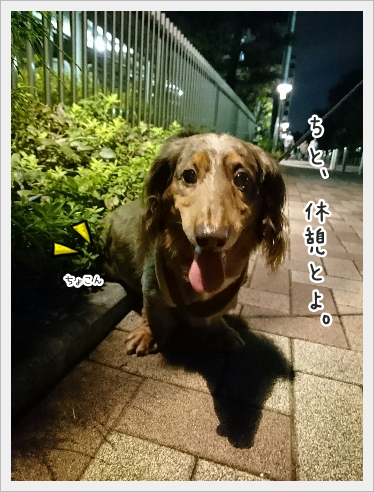 fc2_2016-09-26_05.jpg